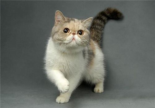 五招搞定猫咪掉毛问题