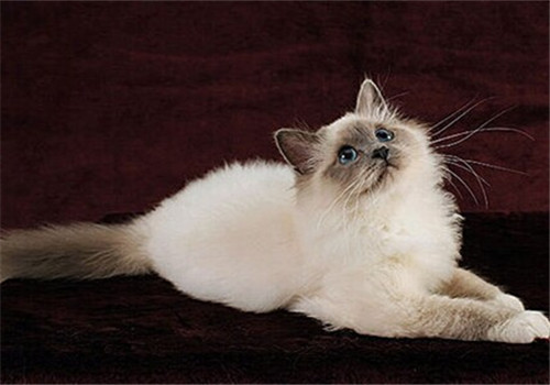 近年来猫咪受欢迎的原因是什么
