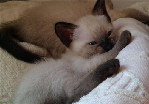 可以给宠物猫用人的洗发水洗澡吗?