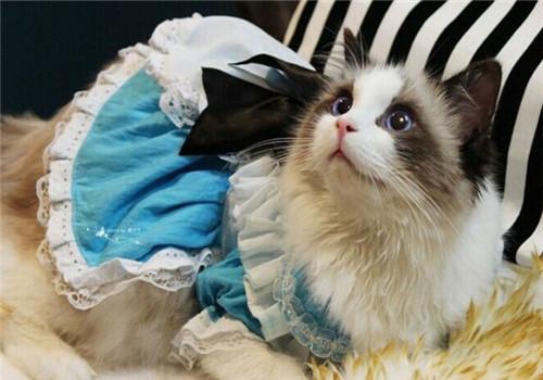 饲养猫咪要有养猫备忘录