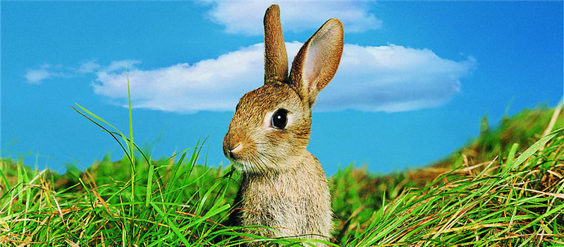 三个要点看野兔的真伪