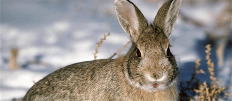 喂食幼兔也需注意定时定量