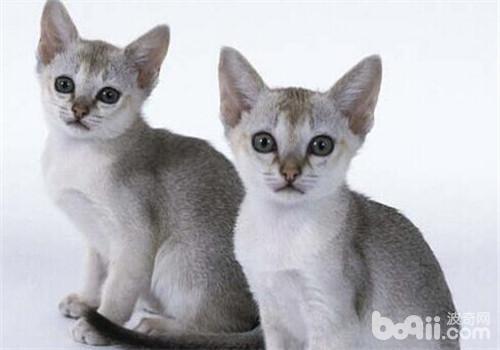 那么今天小编教你训练猫猫乖乖吃饭的小方法