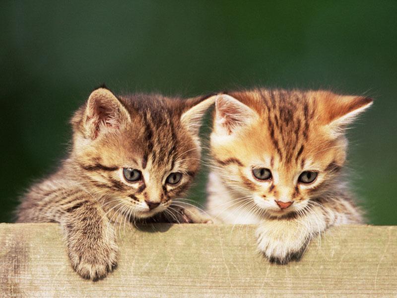 猫咪养护误区之经常洗澡才干净?