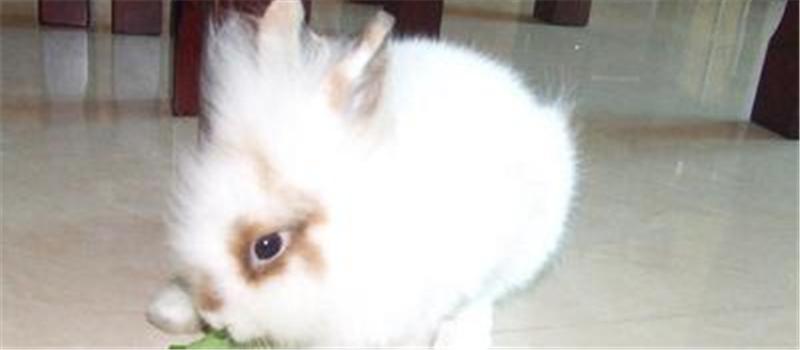 母兔点胎术的实施方法与注意事项