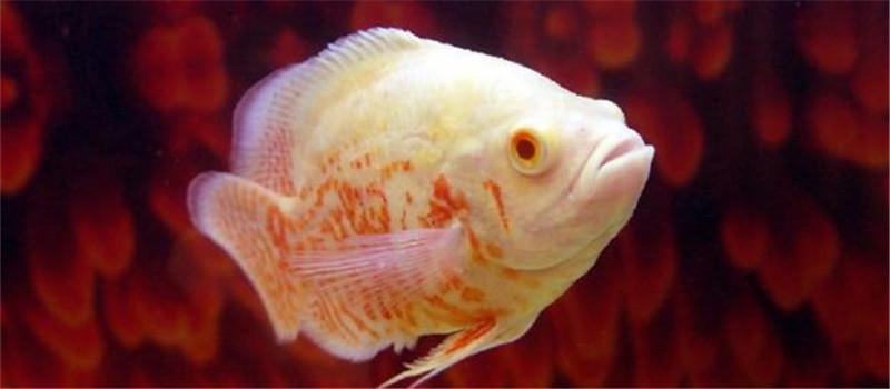 刚买回家的小鱼虾需注意消毒
