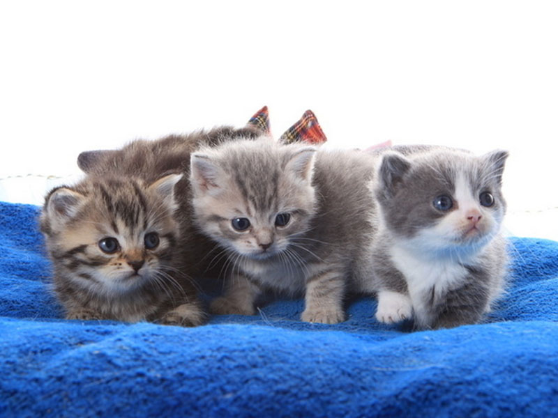 让猫咪到你的眼前来还是你走到猫咪眼前去