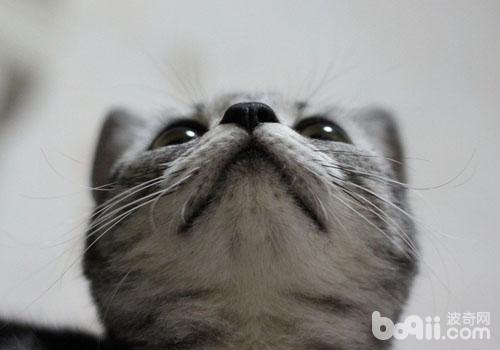 猫咪素描画法步骤兔子
