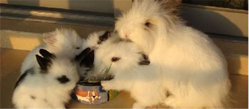 如何预防家兔地方流行性肺炎