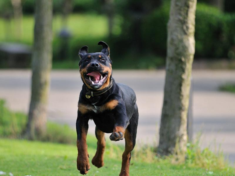 如何正确的奖励狗狗