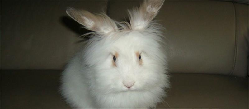 家兔球虫病的预防措施