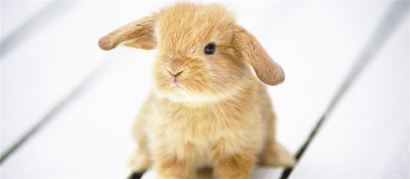 幼兔运动的注意事项