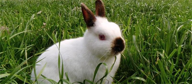 獭兔幼兔应该如何防病