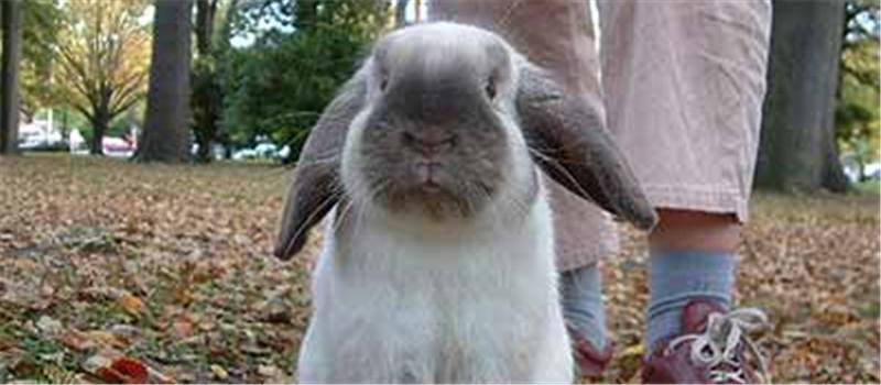 新进家幼兔的喂食要点