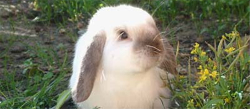 刚到家的断奶小兔应该如何照顾