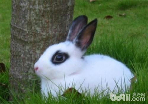 小兔素描画法步骤