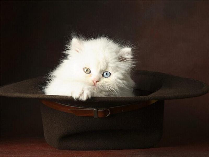 猫咪怀孕期间可以洗澡吗