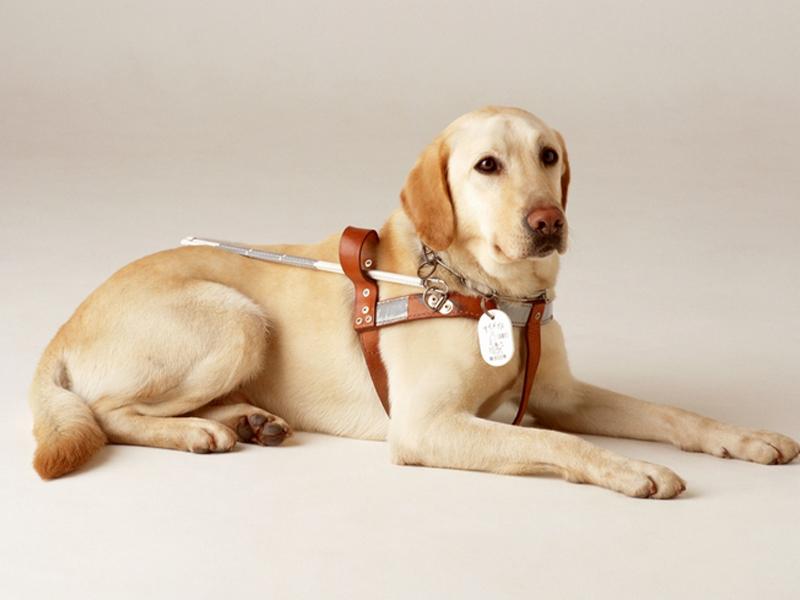 """在街上遇到导盲犬要做到""""四不一问"""""""
