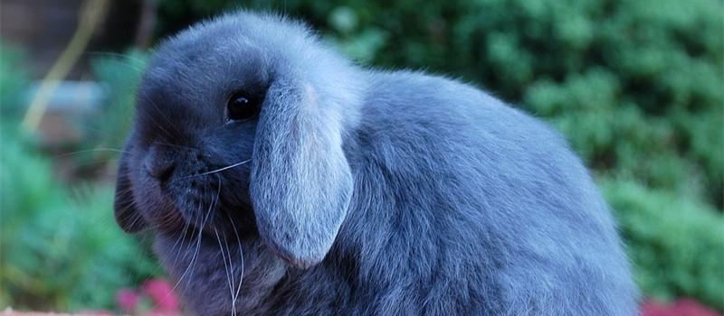 兔兔饲料中添加葡萄糖的好处
