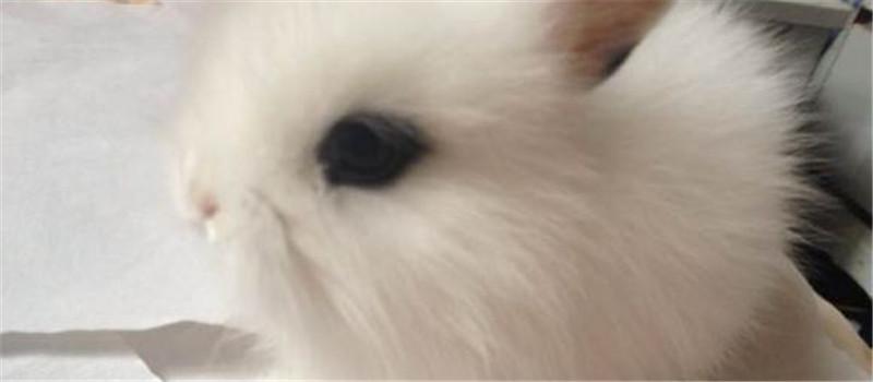切忌单独用红薯秧喂食兔兔