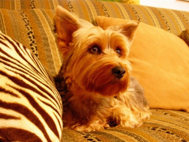 狗狗绝育的影响及最佳年龄