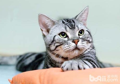 猫咪是一种非常可爱的动物