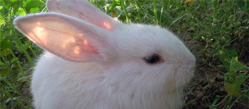 不要使用石棉瓦建造兔舍