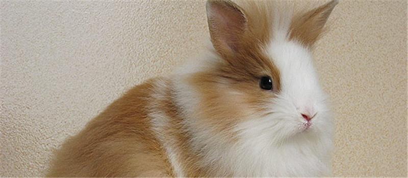 常见的预防兔球虫的药物