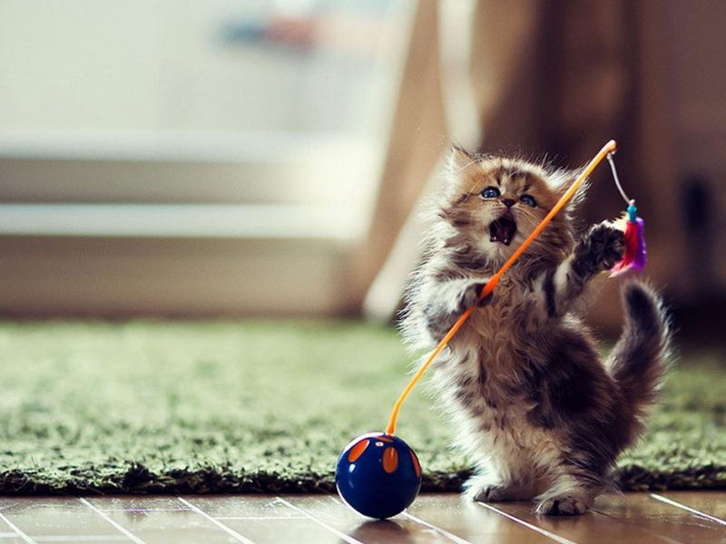 惩罚教育可能会让猫咪的攻击性变强