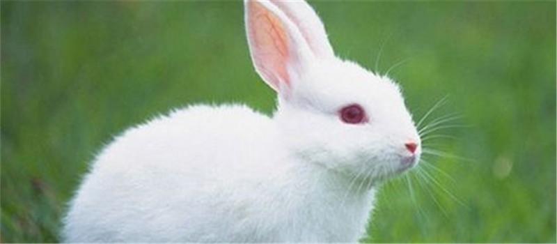 可爱兔兔动物图片
