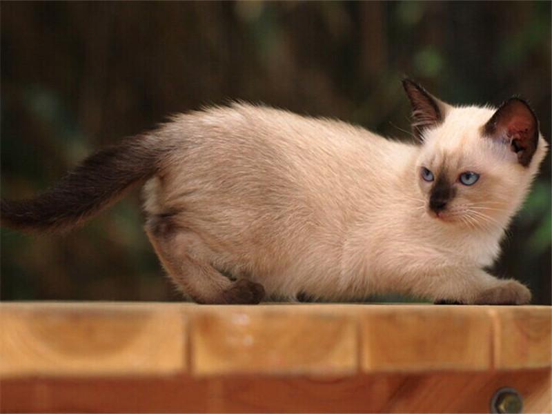 养猫家庭如何饲养其他小动物