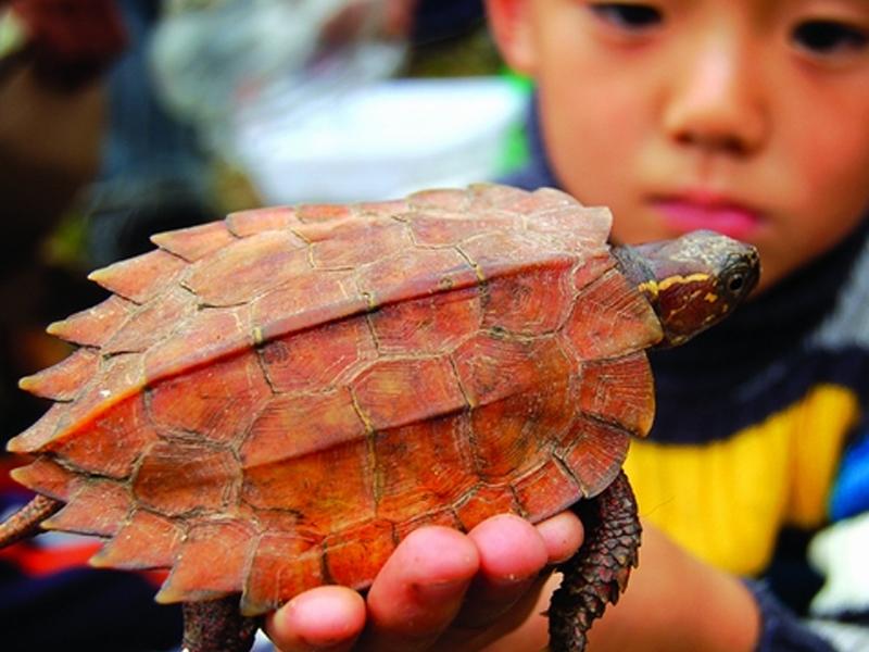 的宠物龟_宠物龟的呼吸方法