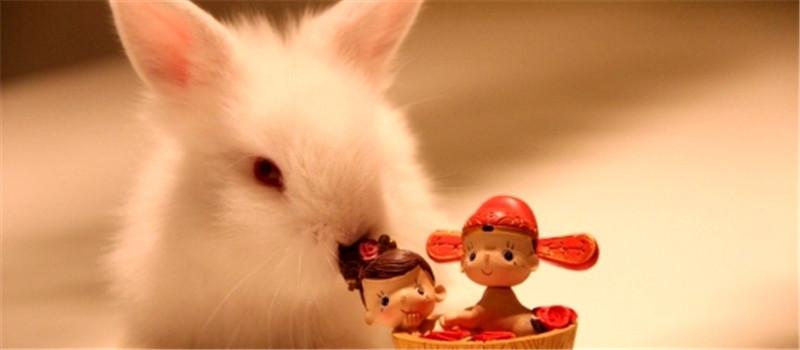 维生素对母兔繁殖障碍的影响