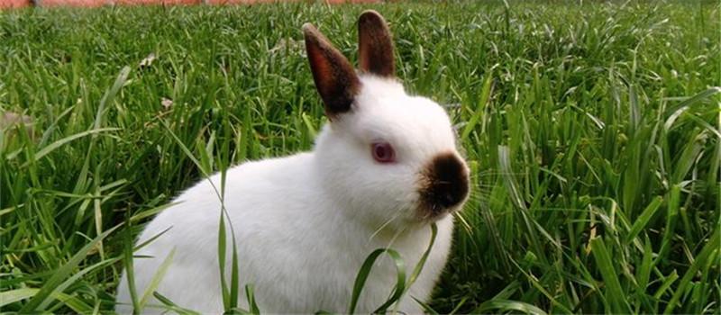 挑选种兔的八个注意事项