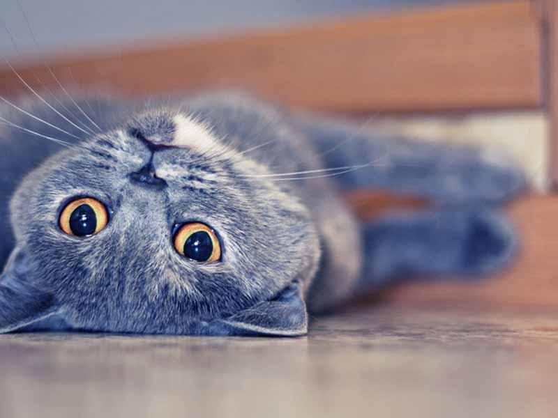猫咪排尿异常是什么原因导致的