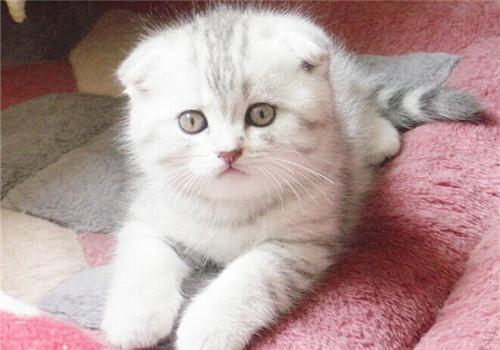 猫咪/猫咪家庭意外事故之异物入喉0 136