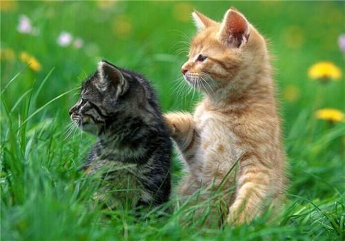 英语 宽容/猫咪家庭意外事故之骨折