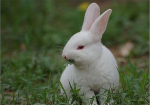 秋养家兔重防疫