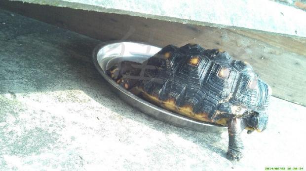 宠物龟哪些损伤是能够恢复的