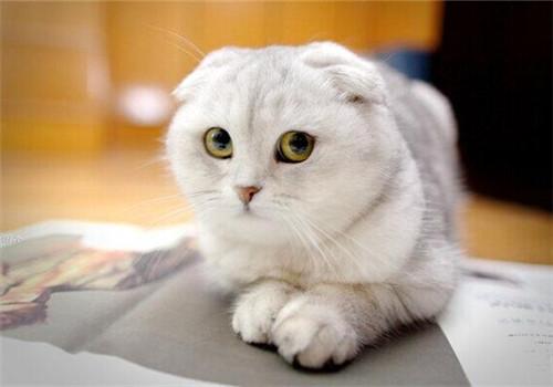 头痛的图片可爱动物