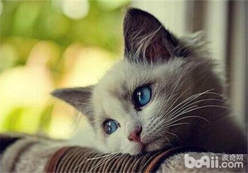 如何训练猫咪使用抽水马桶