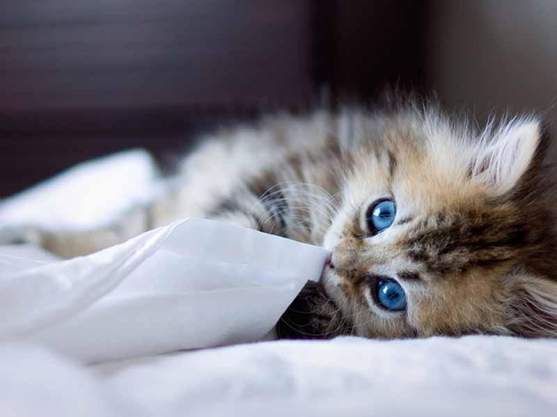 猫咪为什么喜欢上床