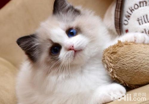 哪些原因会使猫有低血钙症