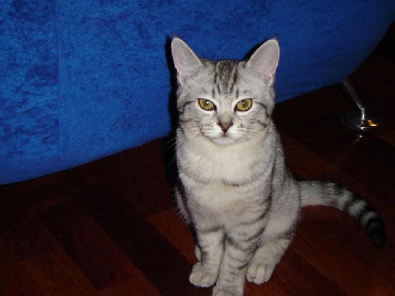 狗狗乳腺炎症状_猫乳腺炎有哪些致病因素及症状 猫咪常见病-波奇网百科大全