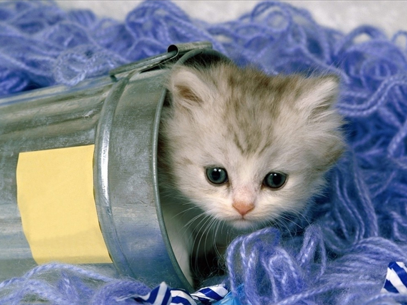 猫乳腺炎的治疗方法有哪些|猫咪常见病-波奇网百科大全
