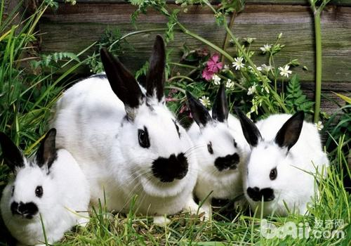 兔脑原虫病的症状有哪些