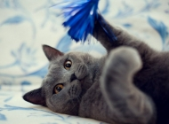 如何防治猫传染性贫血