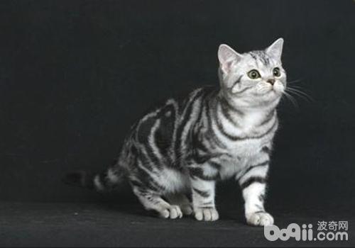 猫下泌尿道疾病吃什么药图片