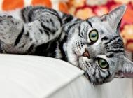 猫杯状病毒有哪些症状