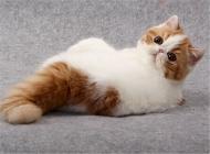 猫瘟治疗的注意事项有哪些